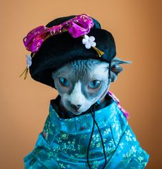 Pics of a few cats in Halloween costumes/Should People Put Their Cats in Halloween Costumes? | Catster