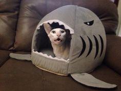"land-like-a-cat: "" Fëanor loves the new shark bed. - Imgur """