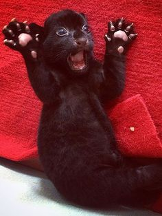 Black Tiger Cub Tries to Terrify, Looks Purr-fectly Precious Instead | People.com
