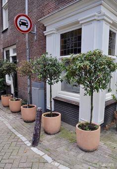 Verborgen groen en geheime tuinen in het centrum van Amsterdam | Fotografie: STIJLIDEE Interieuradvies en Styling via www.stijlidee.nl