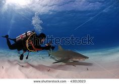 stock photo : A diver videotapes the movement of a small lemon shark at Tiger Beach, Bahamas  Photo by Greg Amptman