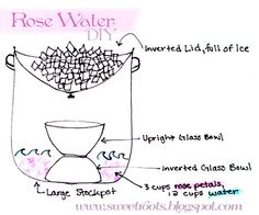 Rose Water (aka Rose Hydrosol) DIY with a makeshift still using items you already have at home! So easy.