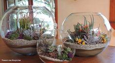 Флорариум   Это очень красивый элемент для домашнего декора, домашняя мини-оранжерея. Еще их называют садами в бутылке. Он выглядит по-настоящему шикарно и сразу привлекает внимание гостей. Поэтому вооружаемся знаниями и делаем флорариум своими руками. Сегодня расскажем: какие цветы подойдут для флорариумов, как правильно выложить грунт и как ухаживать за флорариумом. Растения для флорариума лучше выбирать такие, как кактусы и суккуленты (растения, которые накапливают воду в листьях). Они не…