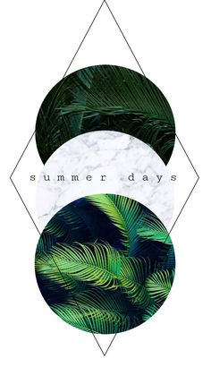 summer days    texture palm tree marble white
