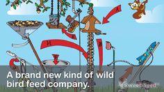 Why do we love wild #bird feeding? My story: Papa B. – Sweet-Seed Blog –