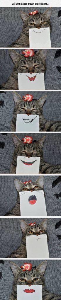 30 Funniest Cat Memes