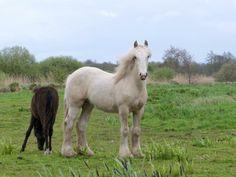 Paard bij de wieden