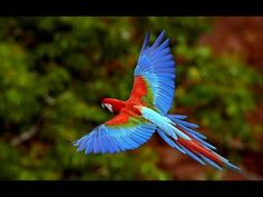 WORLD OF ANIMALS. Funny Birds & Parrots Compilation -  #bird #birds  #birding #animale #bird_watchers_daily #animal #birdwatching #pets #nature_seekers #birdlovers WORLD OF ANIMALS. Funny Birds & Parrots Compilation. Parrots, also known as psittacines, are birds of the roughly 393 species in 92 genera that make up the order Psittaciformes,... - #Birds