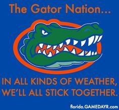 Find the best & newest featured Florida Gators GIFs. Search, discover and share your favorite GIFs. The best GIFs are on GIPHY. Florida Gators Softball, Florida Gators Logo, Uf Gator, Florida Gators Wallpaper, Tim Tebow, University Of Florida, Gymnastics, College Football, College Sport