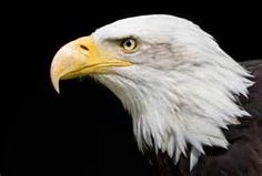 eagles - Yahoo Canada Image Search Results