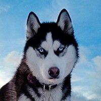 kedi ve köpek ırkları hakkında detaylı bilgiler