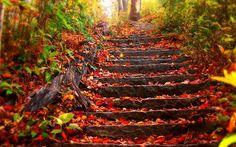 FOTOGALERIE: Podzim umí být krásný! Pokochejte se barevnou přírodou! - galerie
