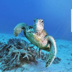 We all love turtles and if you stay at #escapadeisland you'll see lot's if them !  #turtles #newcaledonia #paradiseisland