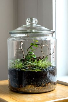 Easy Steps to Making Your Own Terrarium How To Make Terrariums, Make Your Own, Make It Yourself, Small Wonder, Cool Plants, Martha Stewart, Easter Crafts, Indoor Plants, Summer Fun