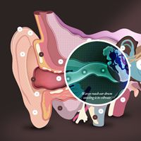 Not an app, but cool! Interactive Ear tool showing how the ear works