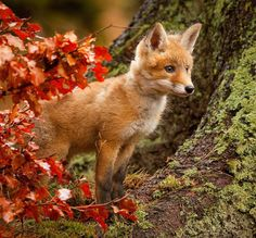 beautiful-wildlife:  FoxbyRobert Adamec