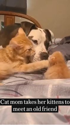 Cat mom takes her kittens to meet an old friend