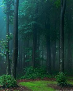 - 🔥 A Foggy Forest in Romania – fascinating nature , , project , house , nature Amazing Photography, Nature Photography, Foggy Forest, Forest Rain, Nature Images, Nature Nature, Natural Wonders, Vacation Trips, Beautiful Landscapes