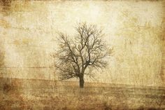 #wallpaper - The Lonely Tree - rebelwalls.com
