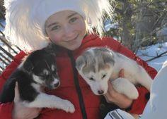 Those little dogs sure are cute! #kemi #travel #finland #sealapland #lapland #husky #safari #dogs #cute