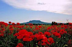 Szent György-hegy. Amberg Anna fotója