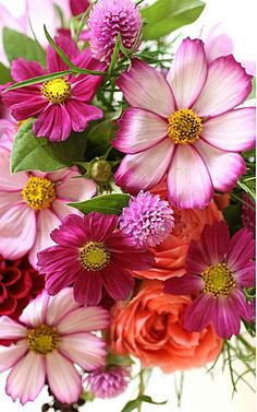 Hundreds of new jigsaw puzzles every day created by users from all around the world. Flowers For You, Pretty Flowers, Spring Flowers, Good Morning Flowers, Flower Wallpaper, Amazing Flowers, Flower Designs, Flower Art, Flower Power