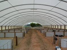 calf rearing sheds - Google Search