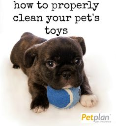 By taking the time to clean (or toss) your dog's toys you can help prevent all sorts of unsavory situations from choking accidents to bacterial infections