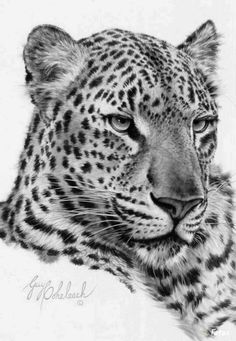 de leopardo Dibujos Dibujo de leopardo Dibujos Portrait of A Predator Motswari Private Game Reserve South Africa by Mario Moreno If you would like to join their next p. Leopard Tattoos, Big Cat Tattoo, Tiger Tattoo, Wild Tattoo, Tattoo Art, Animal Sketches, Animal Drawings, Exotic Cats, Tiger Art