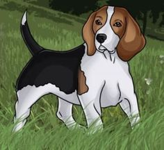 Are you interested in a Beagle? Well, the Beagle is one of the few popular dogs that will adapt much faster to any home. Love Drawings, Cartoon Drawings, Easy Drawings, Animal Drawings, Jack Russell Terrier, Perros Jack Russell, Dog Drawing Tutorial, Drawing Tutorials, Snoopy Drawing