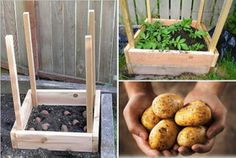 Ako vypestovať až 45 kg zemiakov na 1 m² Clever Diy, Food Art, Planters, Potatoes, Backyard, Gardening, Ethnic Recipes, Flowers, Outdoor