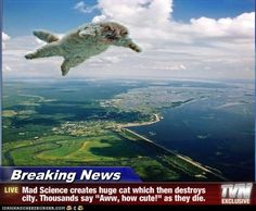 These Breaking News cat memes are hilarious! #11 the Justin Bieber one is my fav