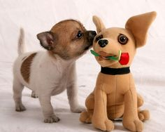 Cute Chihuahuas are my weakness!
