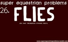 You might just want to call me Lord Of The Flies, equestrian problems...