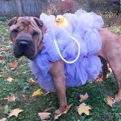 DIY Loofah dog costume #dogcostumes