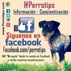 """Haz """"me gusta"""" en nuestra página de Facebook http://ift.tt/1TmYgiS y no te pierdas nuestras actualizaciones #perrotips  También estamos en Twitter como perrotips  #perrotips  #amorperruno #instapets #perrosdeinstagram #cachorros #doglover #cachorro #puppies #can #petstagram  #canes #mascotas #perro #adoptanocompres #hablandoporlosquenotienenvoz  #adopta #perros #dog  #pets #animales #dogsofinstagram #instadogs #noalmaltratoanimal #perrosgram"""