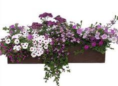 Zmiešané výsadby   Kvety a Záhrada