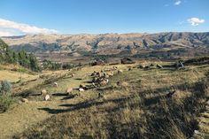 Passagens em promoção para Cusco a partir de R$ 1.462 com taxas