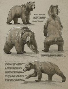 Art tutorials for all — anatoref: Bear by Aaron Blaise - Baer - Animales Animal Sketches, Animal Drawings, Drawing Animals, Ours Grizzly, Polar Bear Drawing, Urso Bear, Elefante Tattoo, Bear Sketch, Bear Paintings