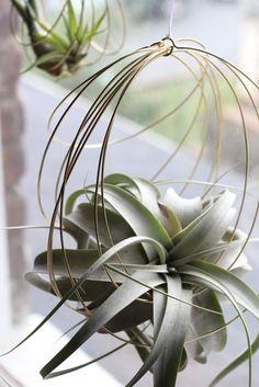 Ornements de Tillandsia ornements de plante dair par elainebjewelry