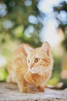 cat  (JavierAndrés)
