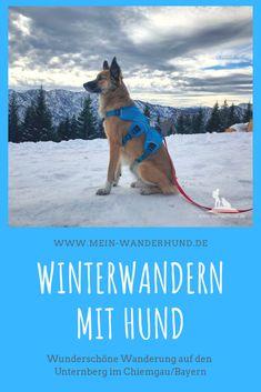 Tourbeschreibung einer wunderschönen Winterwanderung mit Hund im Chiemgau auf die Unternberg Alm. Roadtrip, All Dogs, Hiking, Adventure, Pets, Camper, Hotels, Hacks, Clothing