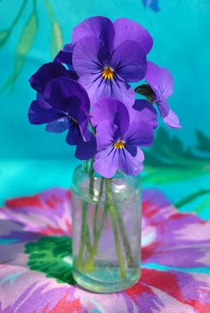 Viola--My mother's name and her favorite flower.
