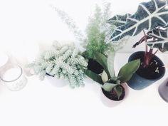Green galore #plant