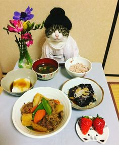 This Cat Wants To Be Your Personal Chef