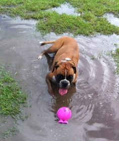 """Whenever it rains I get my own swimming pool in the park. Woof."""