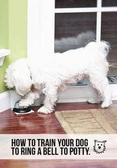 Learn how to train your dog to ring a bell to go potty! A great resource for new dog owners.