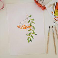 chuykova Рябина  #watercolor #drawings #art #myart #ske - Looktagram