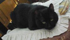 PISA (STAZIONE): SMARRITO PICCOLINO, GATTO NERO http://www.terzobinarionetwork.com/2015/07/pisa-stazione-smarrito-piccolino-gatto.html