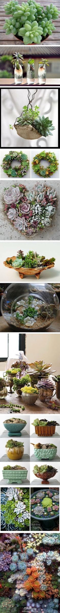 """suculentas* love them for """"live"""" decor Succulent Gardening, Cacti And Succulents, Planting Succulents, Container Gardening, Planting Flowers, Succulent Ideas, Succulent Terrarium, Succulent Decorations, Succulent Display"""